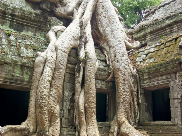 Cambogia Ta Prohm