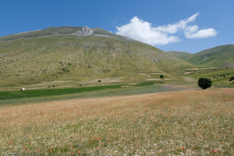 Cammino nelle Terre Mutate viaggio in centro Italia a piedi papaveri Castelluccio di Norcia