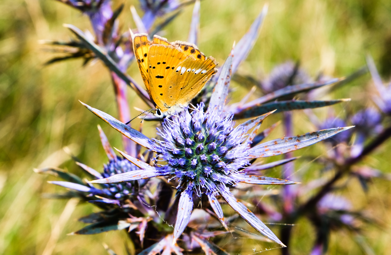 Cammino nelle Terre Mutate viaggio in centro Italia farfalla