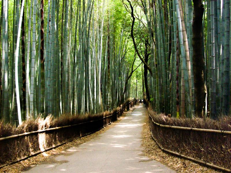 Giappone Kyoto bambù