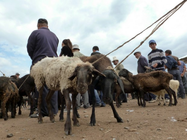 Kirghizistan mercato animali