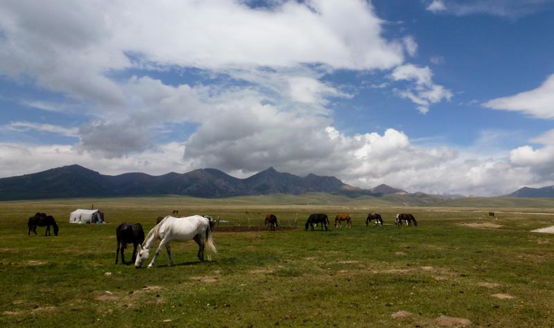 Kirghizistan cavalli