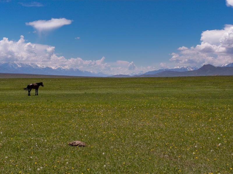Kirghizistan prateria