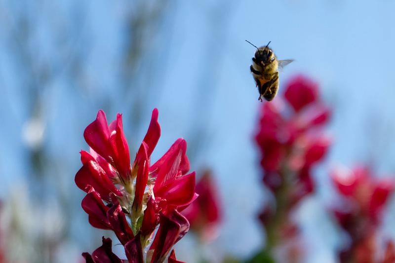 Apre in volo sul fiore