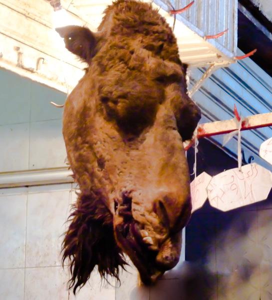 Marocco mercato testa di cammello