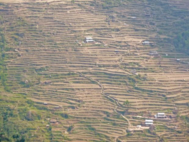 Nepal risaia