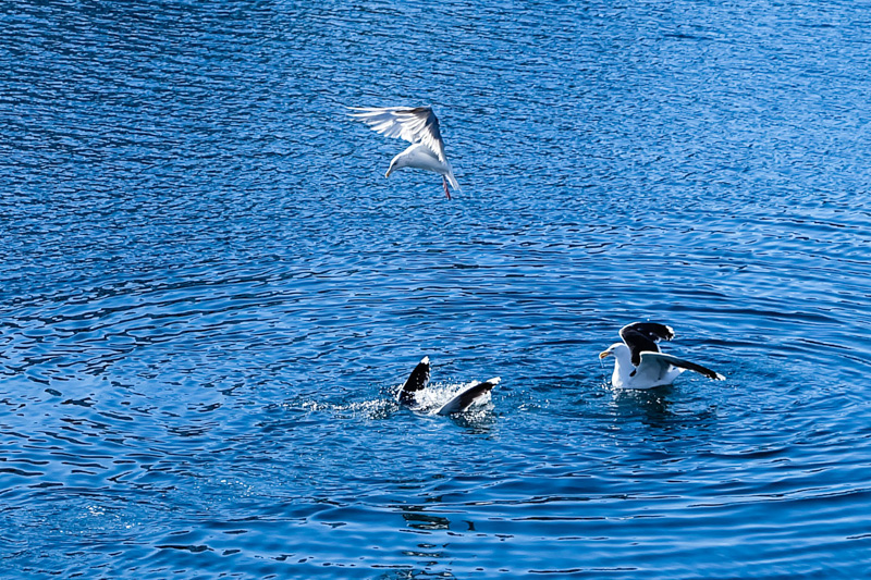 Norvegia uccelli