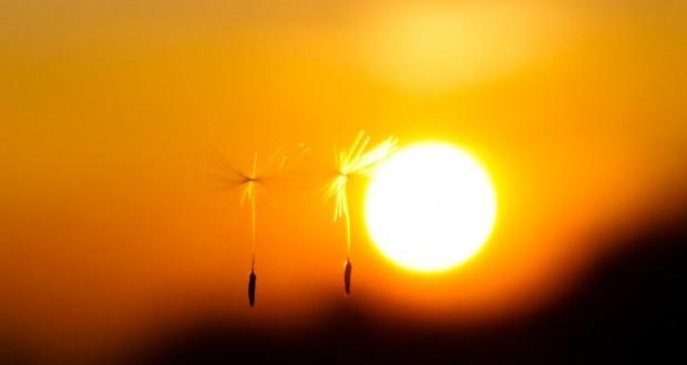 Soffione tramonto