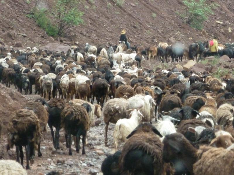 Pamir Highway pecore via della seta