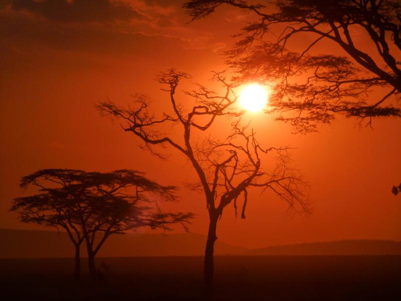 Savana tramonto tanzania