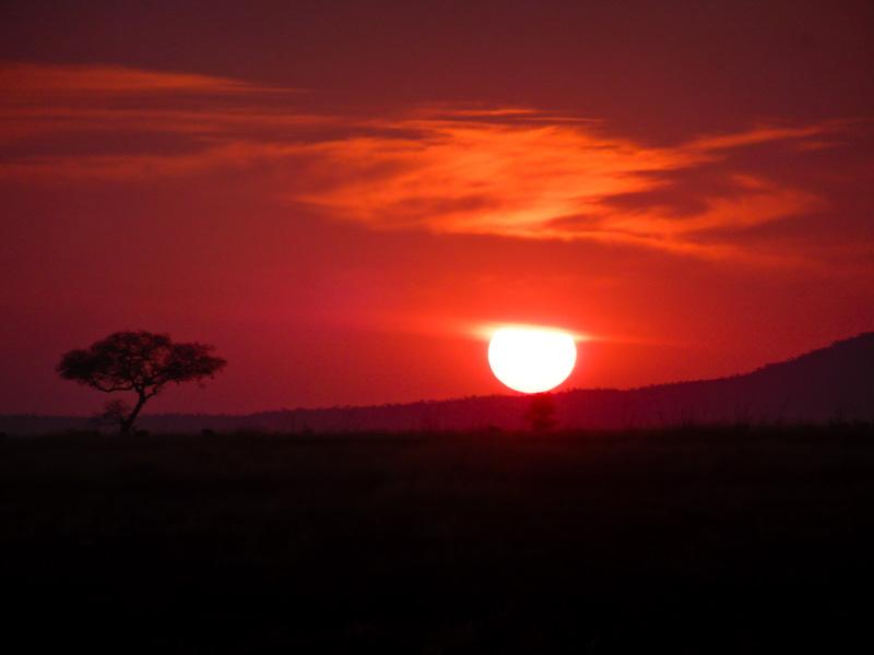 Savana tramonto serengeti