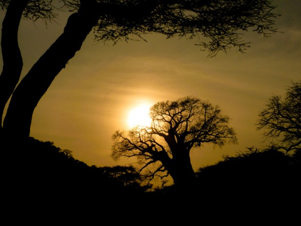 Tanzania baobab