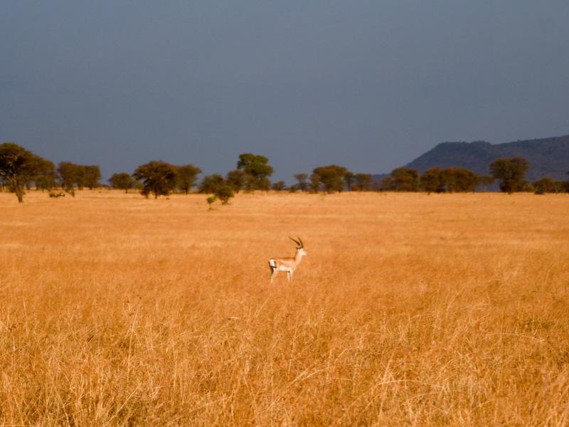 Savana viaggio serengeti