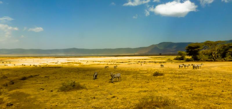 Tanzania Ngorongoro zebre
