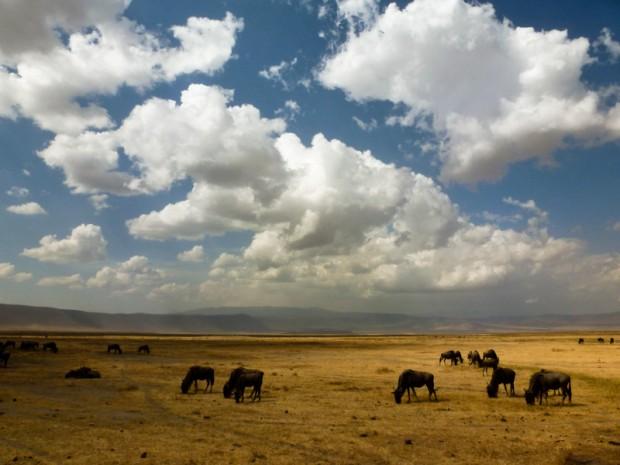 Tanzania: la caldera dello Ngorongoro