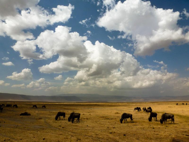 Tanzania viaggio parco Ngorongoro
