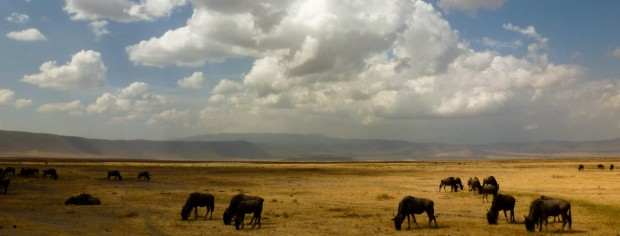 Tanzania Ngorongoro viaggio