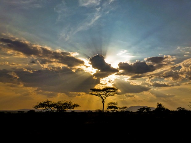 Savana acacia serengeti tanzania