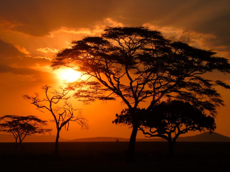 Savana tramonto