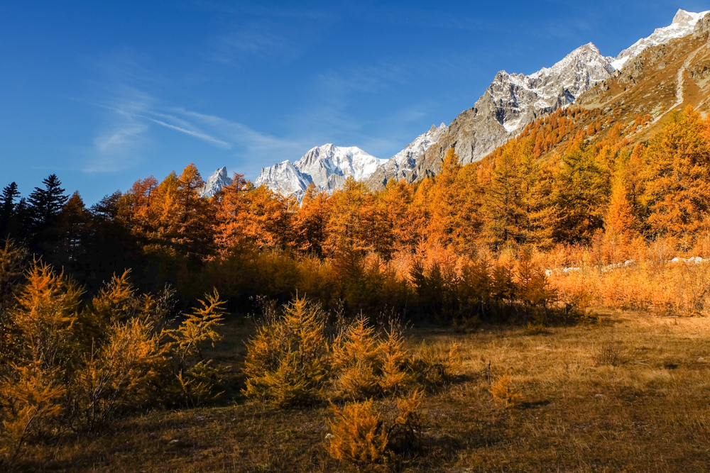 Valle d'aosta - Larici rossi in autunno