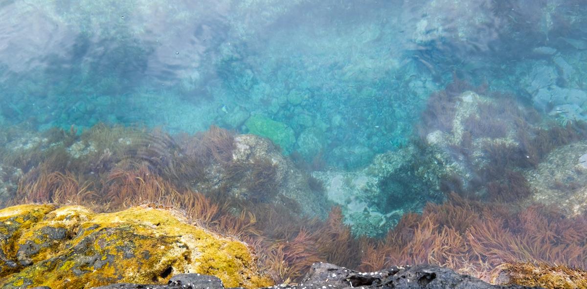 Viaggio a Flores e Corvo isole Azzorre mare