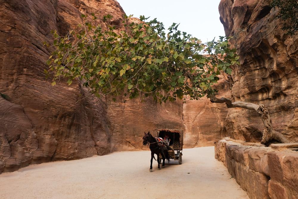 Viaggio in Giordania petra cavallo