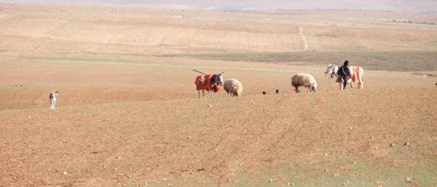 Viaggio in Giordania racconto (14)