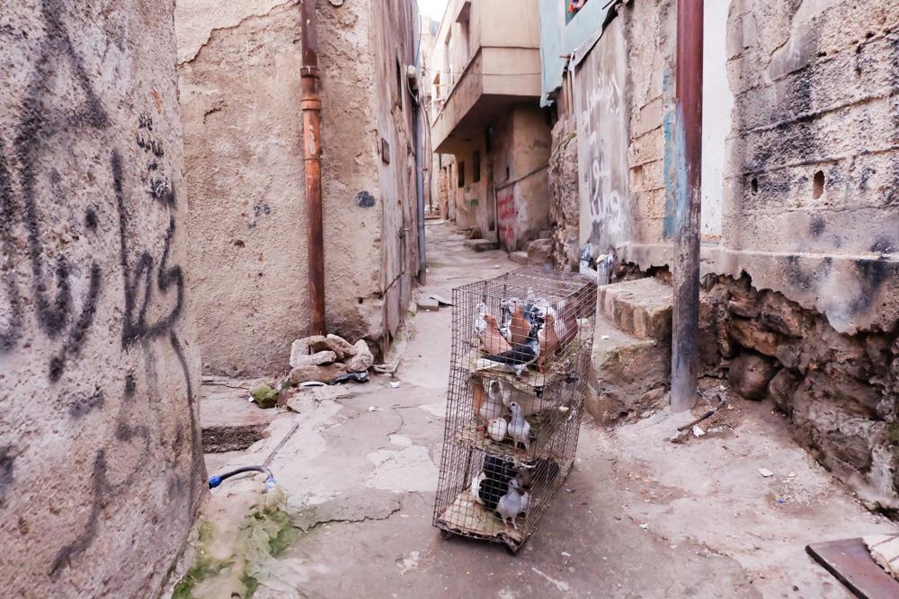 Viaggio in Giordania racconto amman