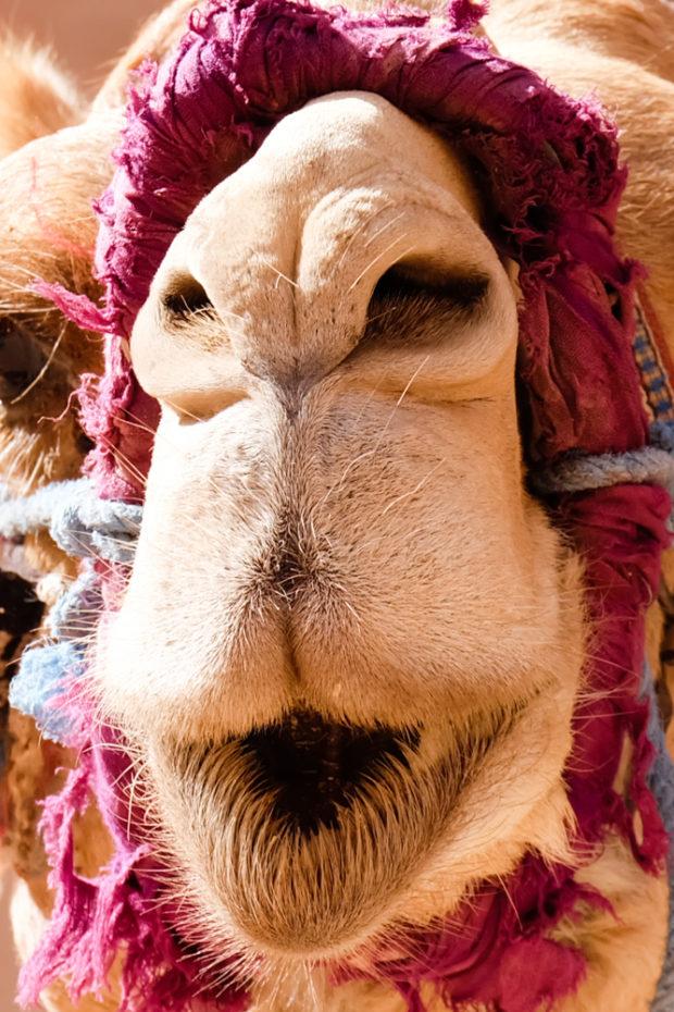 Viaggio in Giordania racconto cammello blog