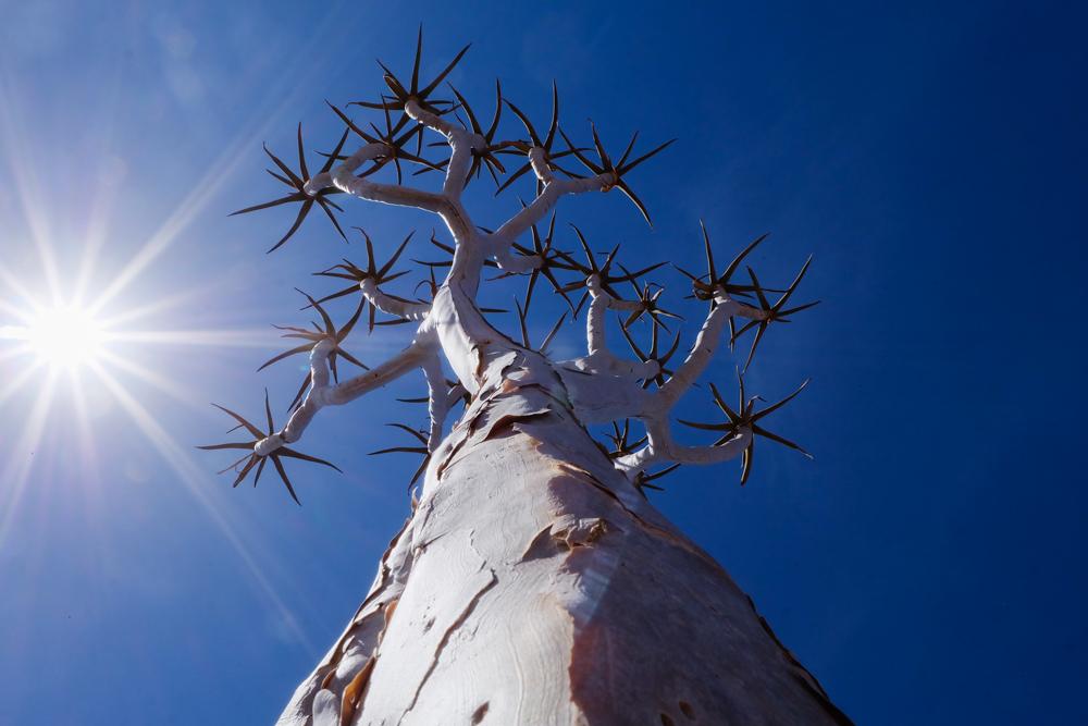 Viaggio in Namibia albero
