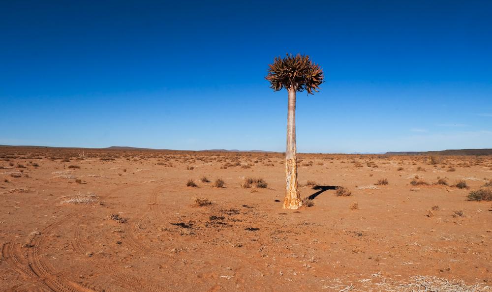Viaggio in Namibia aloe