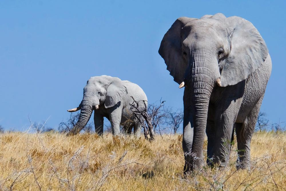 Viaggio in Namibia elefante
