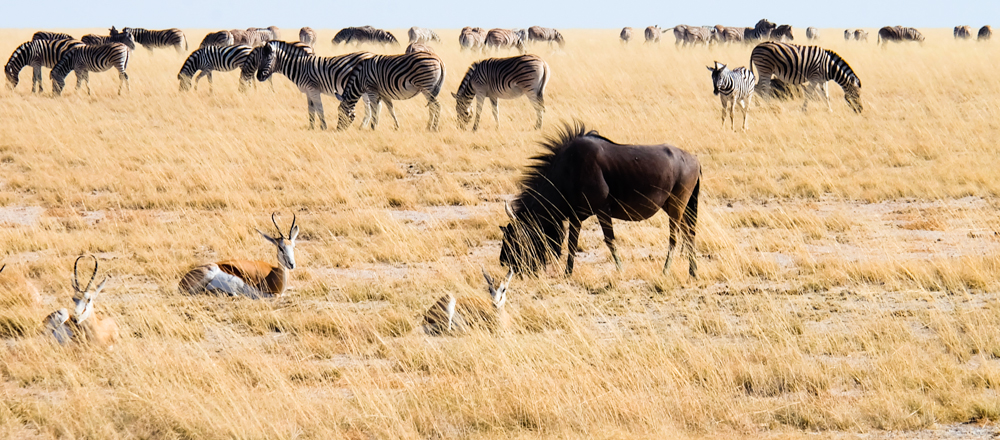 Viaggio in Namibia etosha animali