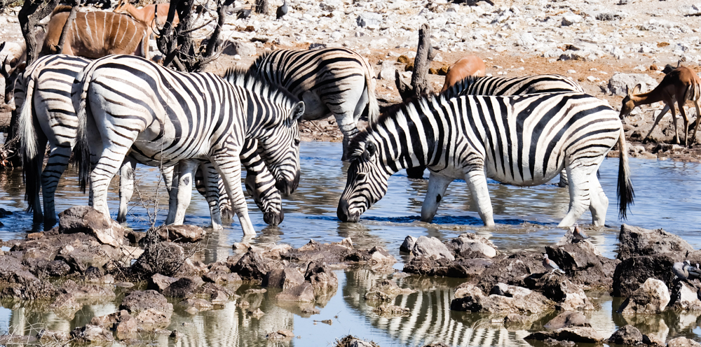 Viaggio in Namibia etosha