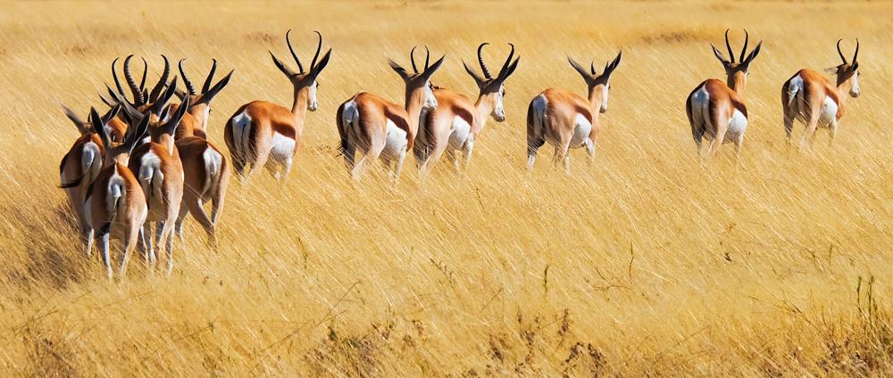 Viaggio in Namibia gazzelle