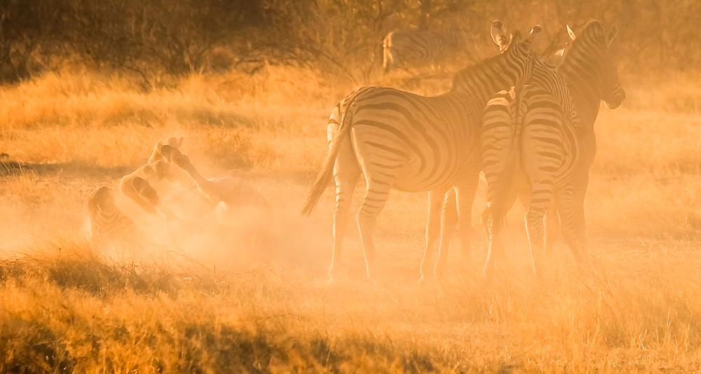 Viaggio in Namibia zebre tramonto
