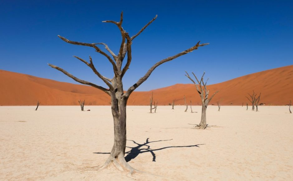 alberi sussousvlei namibia deserto