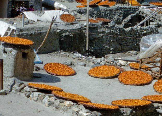 albicocche secche pakistan