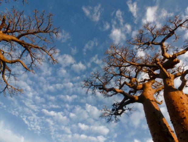baobab strada madagascar morondava tramonto