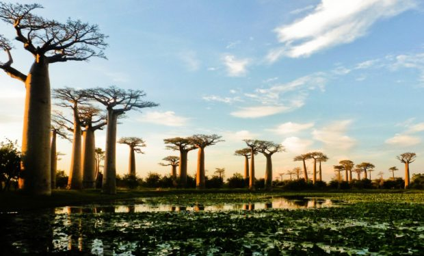baobab strada tramonto madagascar