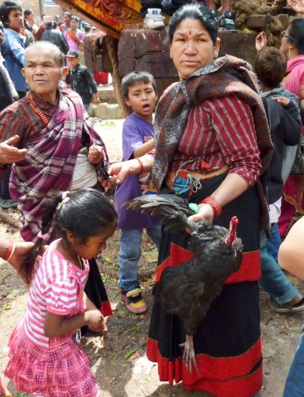 bhaktapur sacrificio pollo