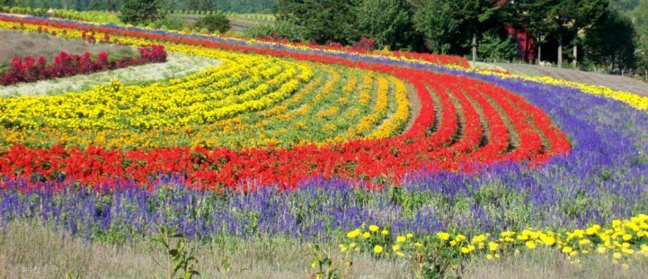 campi di fiori giappone