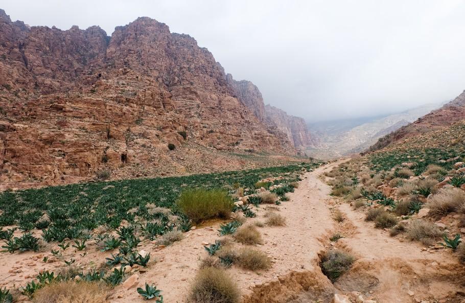dana wadi giordania escursione trekking