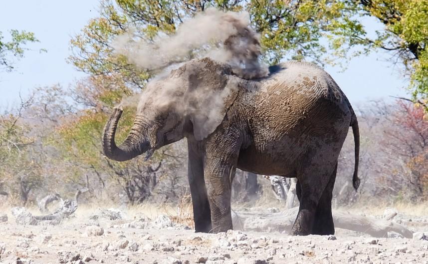 etosha namibia elefante