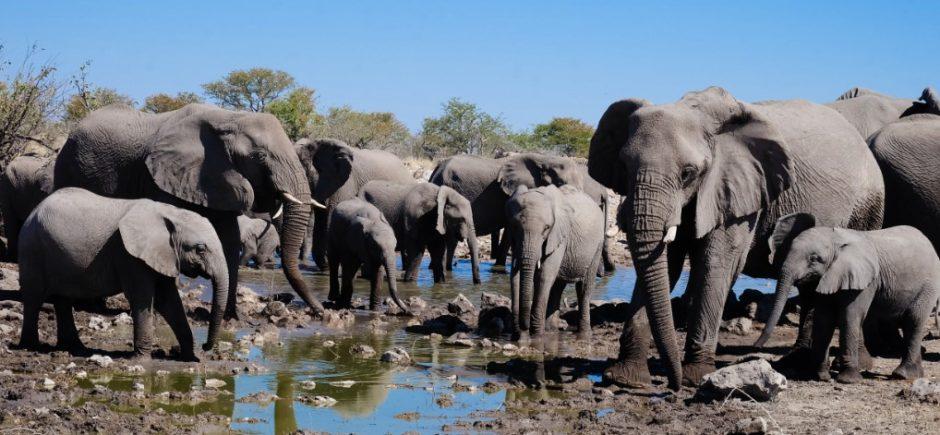 etosha namibia elefanti pozza