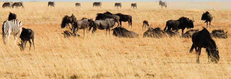 etosha namibia panorama