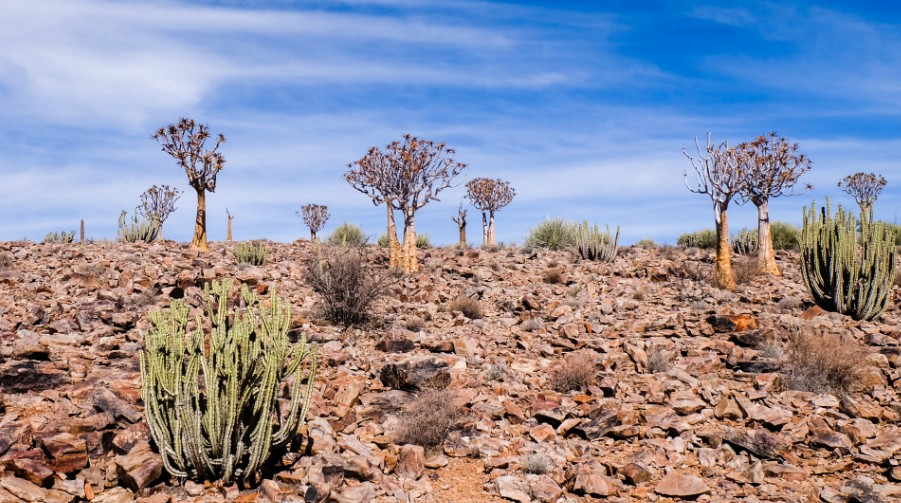 fish river canyon cactus viaggio namibia
