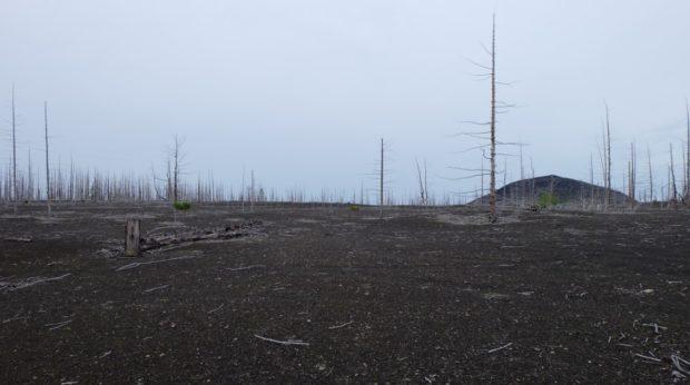 foresta cenere kamchatka