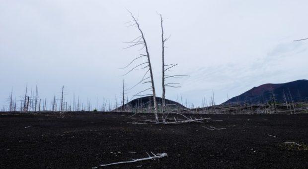 foresta pietrificata cenere kamchatka