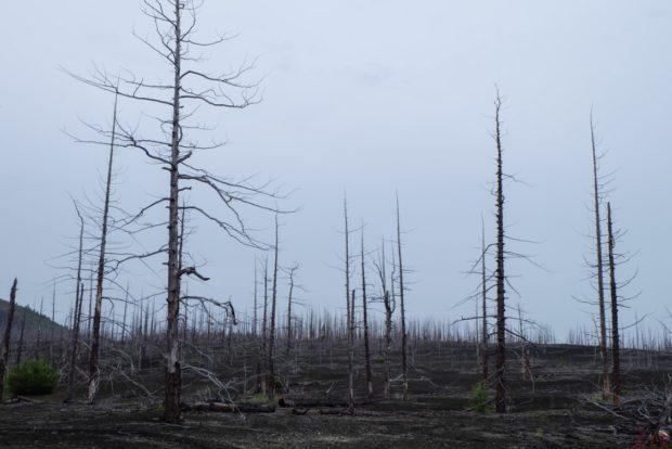 foresta pietrificata kamchatka